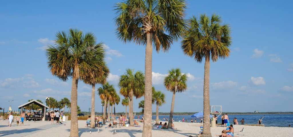 Pine Island Florida Festival
