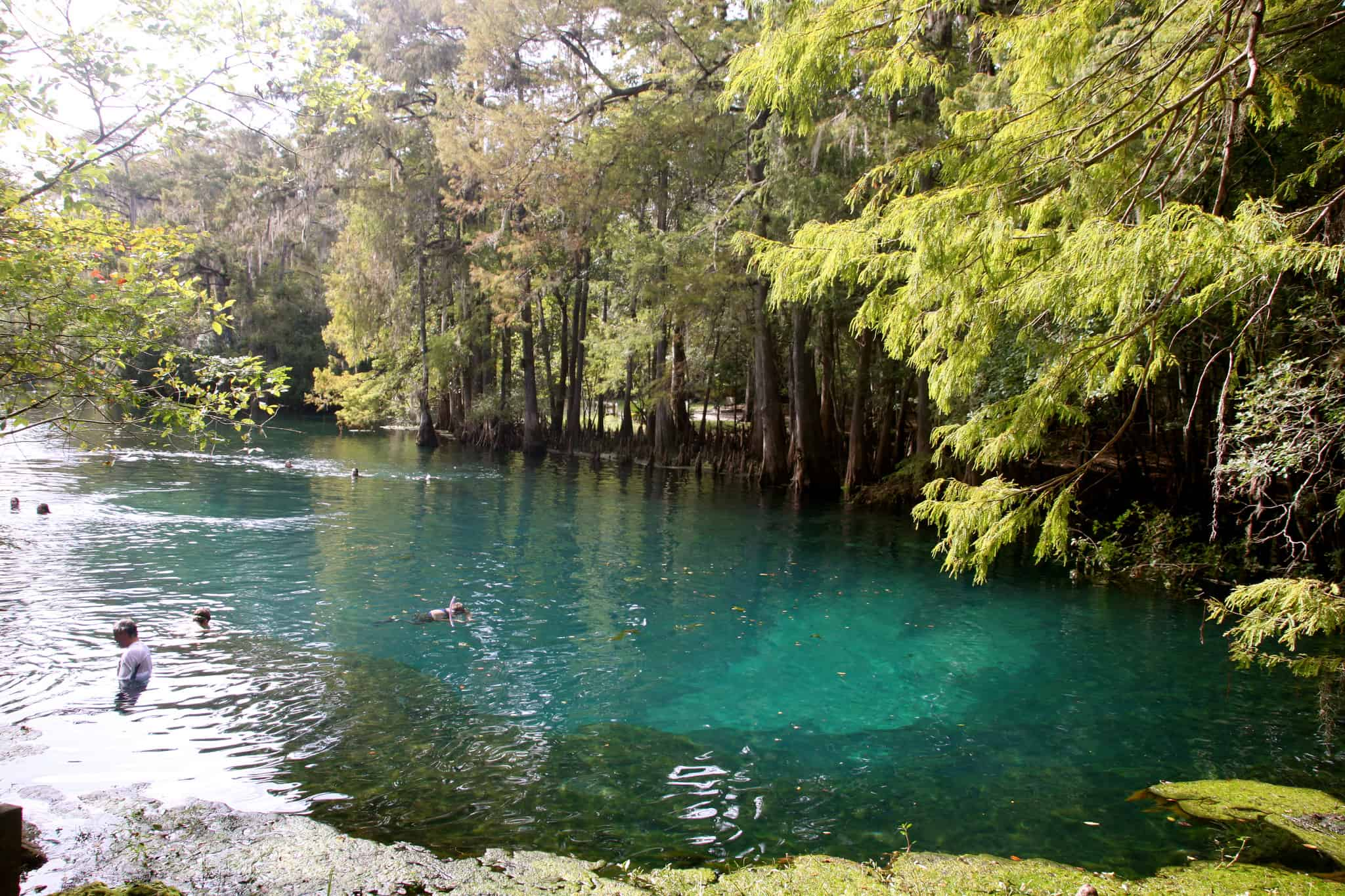 Snorkeling At Homosassa Springs State Park Chickery S