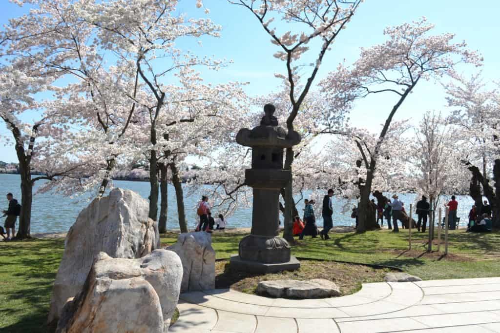 Cherry Blossom Festival Stroll Around The Tidal Basin