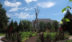 exterior view of the National Museum of American History's Victory Garden