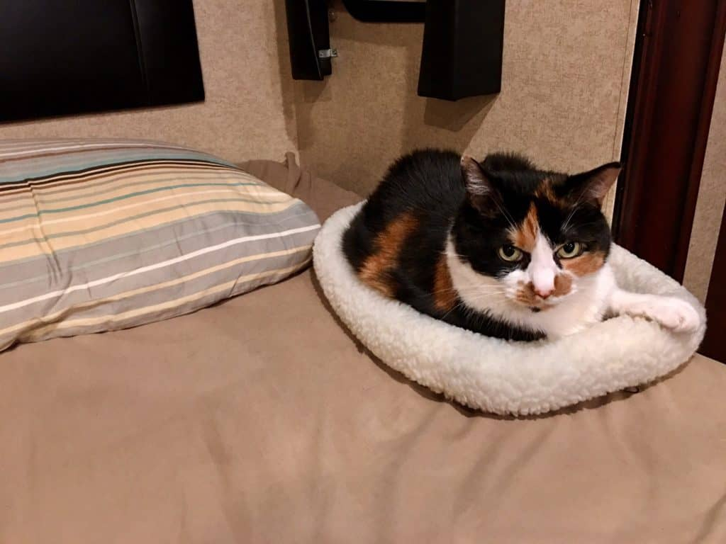 Calico cat in her bed