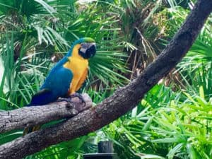 Macaw at Brevard Zoo