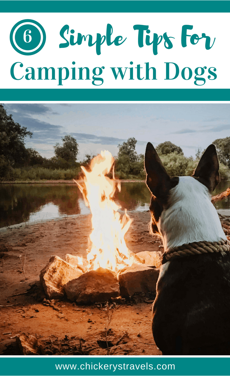 Take your dogs on your next road trip and go camping! Follow these tips for camping and RV travel vacations with dogs.