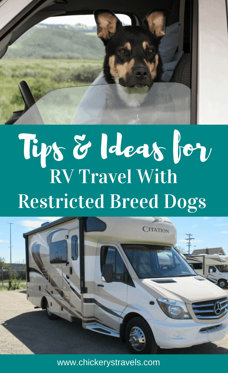Take your dogs on your next road trip and go camping! Follow these tips for camping and RV travel vacations with restricted breed dogs.
