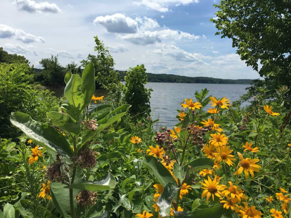Fort Belvoir Flowers