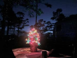 Outdoor mini Christmas Tree with Lights