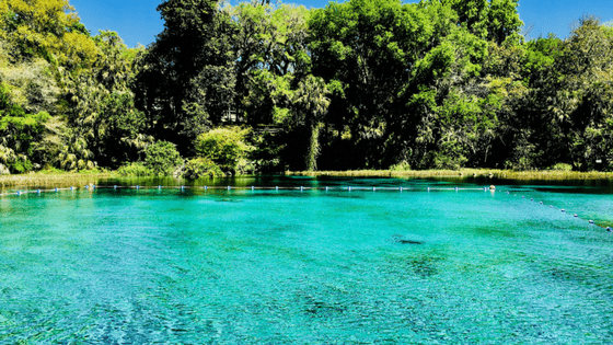 Enjoy a refreshing dip in the beautiful crystal clear waters of Rainbow Springs State Park.