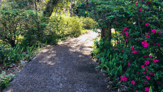Enjoy the gorgeous scenery along the winding paved walking paths at Rainbow Springs State Park.