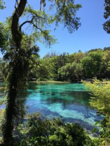 The natural freshwater springs at Rainbow Springs State Park produce more than 400 gallons on crystal clear water per day. Enjoy a dip in the refreshing water or a peaceful walk among nature at this Florida State Park.