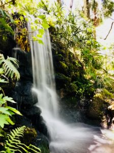 Enjoy the beautiful waterfalls at Rainbow Springs State Park in Florida.