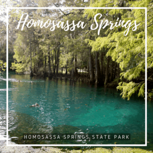 A popular place to see West Indian manatees every day of the year, Homosassa Spring in an inviting source of cool, clear crisp water perfect for swimming and paddling.