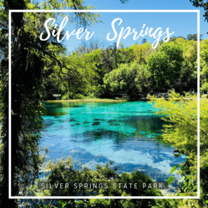 Silver Springs State Park combines the charm of a historic Florida attraction with the crystal clear beauty of one of the last uninhabited spring runs in the state. Silver Spring in an inviting source of cool, clear crisp water perfect for swimming and paddling.