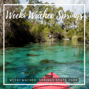 Weeki Wachee is an enchanted spring where you can see live mermaids, take a trip on a river boat cruise, learn about Florida wildlife, and swim in the pristine waters at Buccaneer Bay. You can also embark on a paddling adventure down the pristine waterway of the Weeki Wachee River. Weeki Wachee Springs State Park is one of Florida's most legendary and unique family destinations, entertaining audiences since 1947.