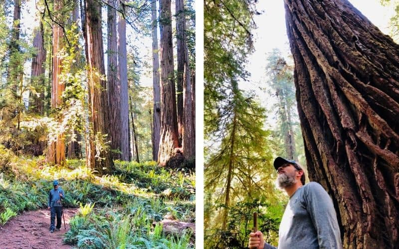 We stayed at the Crescent City Redwoods KOA, and would highly recommend it to anyone. They even have cabins if you don't have an RV, but the best part is they have a nature trail that goes through Redwoods right there in the campground!