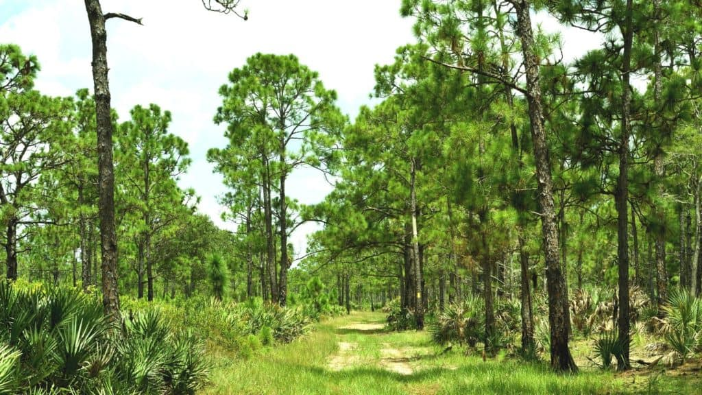 Free camping is available in Florida at several wildlife and water management areas.