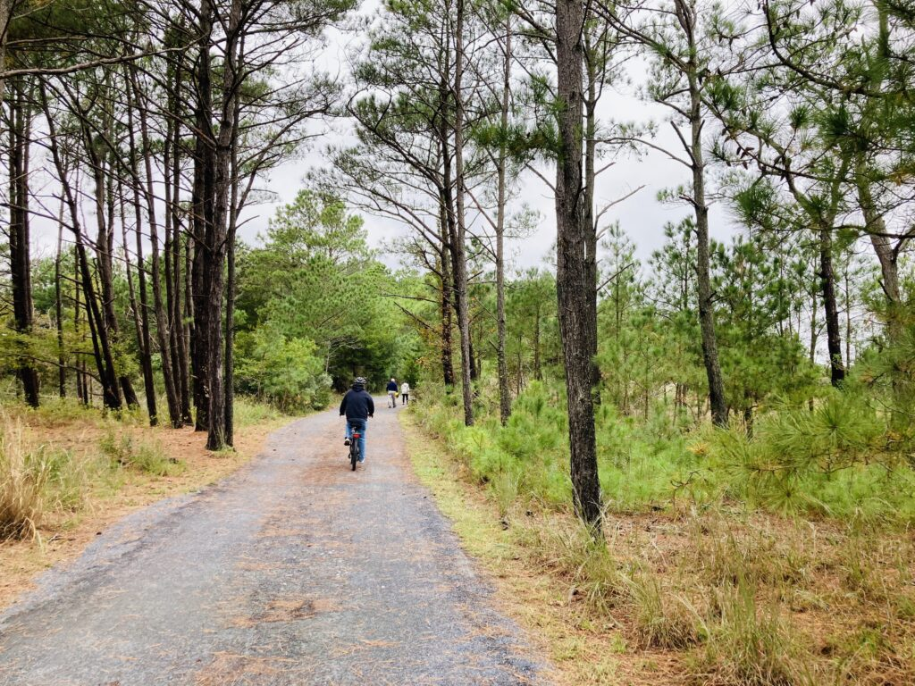 Another fabulous thing about Cape Henlopen State Park was the bike trails that run right alongside the campground and branch out around the entire park. In fact, there are over 17 miles of multi-use trails and one that goes by the Lewes Ferry and into Rehobeth Beach.